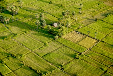 Flying Over Lush Rice Fields in A Microlight
